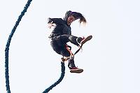 SAO PAULO, SP, 21.09.2014 - VIRADA ESPORTIVA - PARQUE DO CARMO - SP - Bunge Jump no Parque do Carmo, zona leste de São Paulo, durante o ultimo dia de Virada Esportiva 2014.  (Foto: Marcelo Brammer / Brazil Photo Press).