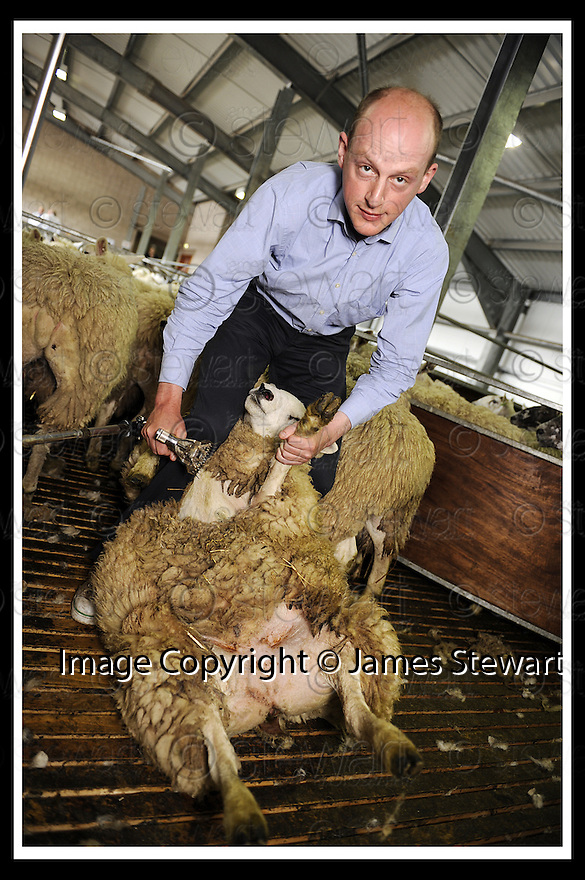 22/06/2008   Copyright Pic: James Stewart.File Name : sct_jspa02_sheep_shearing.REPORTER, HARRY MOUNT, GETS THE CHANCE TO SHEAR A SHEEP AT THE ROYAL HIGHLAND SHOW, EDINBURGH......James Stewart Photo Agency 19 Carronlea Drive, Falkirk. FK2 8DN      Vat Reg No. 607 6932 25.Studio      : +44 (0)1324 611191 .Mobile      : +44 (0)7721 416997.E-mail  :  jim@jspa.co.uk.If you require further information then contact Jim Stewart on any of the numbers above........