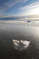 Feather frozen in the icy shore along Barter Island, Beaufort Sea, Alaska.