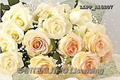 Maira, FLOWERS, BLUMEN, FLORES, photos+++++,LLPPA15207,#F#