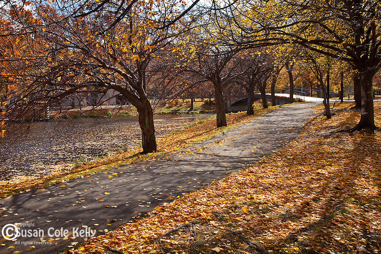 Autumn leaves blow in the wind on the Charles River Esplanade, Boston, MA, USA