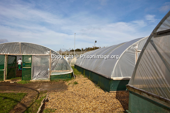 Plastic poly tunnels used as greenhouses, for the Prison garden projects at HMP & YOI Guys Marsh. Shaftesbury, Dorset, United Kingdom. Guys Marsh is a category C prison in Dorset and can house 578 prisoners.