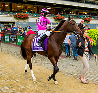 "OCTOBER 6, 2018 : Casa Creed in post parade of the ""Win & You're In"" Champagne Stakes on Champagne Stakes Day at Belmont Park on October 6, 2018 in Elmont, NY.  Sue Kawczynski/ESW/CSM"