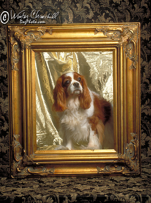 Regal Cavalier King Charles Spaniel in the studio Shopping cart has 3 Tabs:<br />