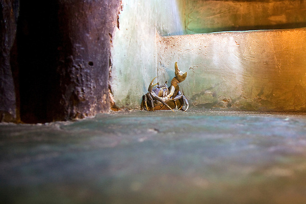 A crab cornered in a cabana.
