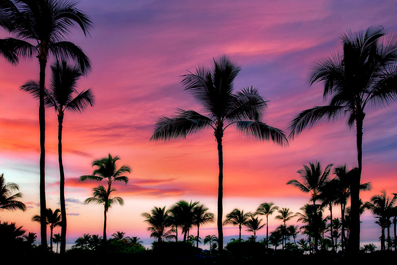 Full moon over palm trees with sunrise in Maui, Hawaii.