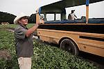 Dago, le chef d'equipe, donne des instructions pendant la recolte de pasteques en Caroline du Nord. Dago, the crew leader, gives instructions, during the watermelons harvests, july 2012.