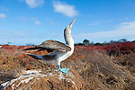 North Seymour Island in the Galapagos National Park, Galapagos, Ecuador, South America