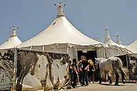 The horses of Cavalia arrive at their signature White Big Top in San Jose on July 13, 2012, for performances through August.