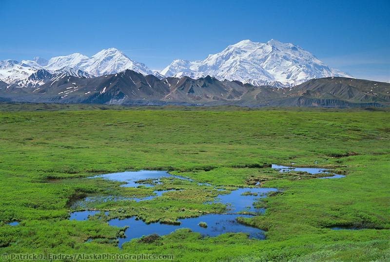 Mt. Denali, green summer tundra and ponds, Alaska Range, Denali National Park, Alaska