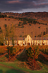 Sunset light over vineyards at Chimney Rock, Silverado Trail Napa County, California