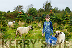 Jayden Sugrue from Farmers Bridge on his father Paudi's Christmas Tree farm with the sheep who are been used to control the weeds