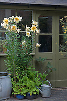Tall day lilies flourish in terracotta planters by the glass front door and create sharp accents against the darker olive green of the woodwork