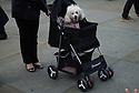 A woman pushes a dog in a pram at the 10th Japanese Matsuri Festival, Trafalgar Square, London.