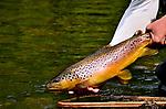 Spring creek brown