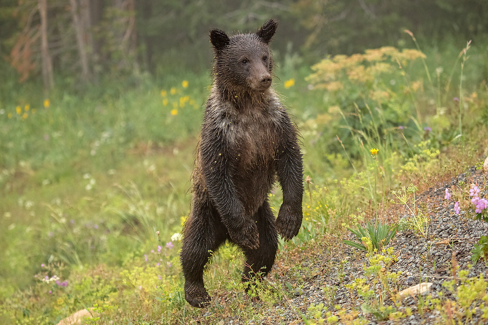 Books We Love Insider Blog: Bears and more bears at