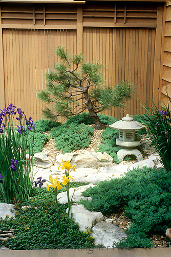 Japanese garden detail in pocket garden off deck