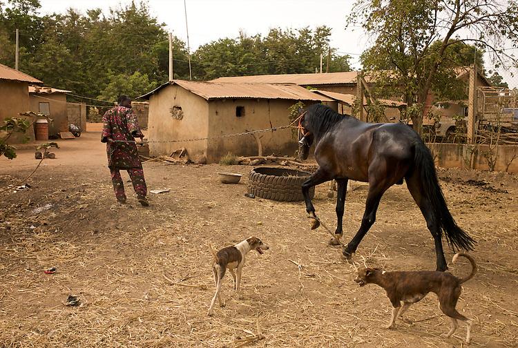 Danda is taken to the truck that is going to bring him to Djougou.<br />  <br /> Danda est men&eacute; au camion qui va le transporter &agrave; Djougou.