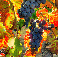 Harvest Season I
