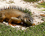 Cayman wild life & flora 2015