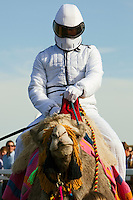 Camel Racing In England