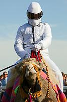 Camel Racing In England