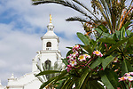 Plumeria blossoms on the grounds of the Tijuana Temple of The Church of Jesus Christ of Latter-day Saints (Mormon).  The temple was built in the Spanish Colonial style and resembles the old Spanish missions built through northern Mexico and the southwestern United States.