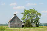 Weathered wooden barn with tree, rural Ill.