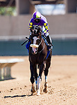 AUG 29: Kentucky Derby hopeful, Honor AP works out at Del Mar Thoroughbred Club with regular jockey Mike Smith aboard, in Del Mar, California on August 29, 2020. Evers/Eclipse Sportswire/CSM
