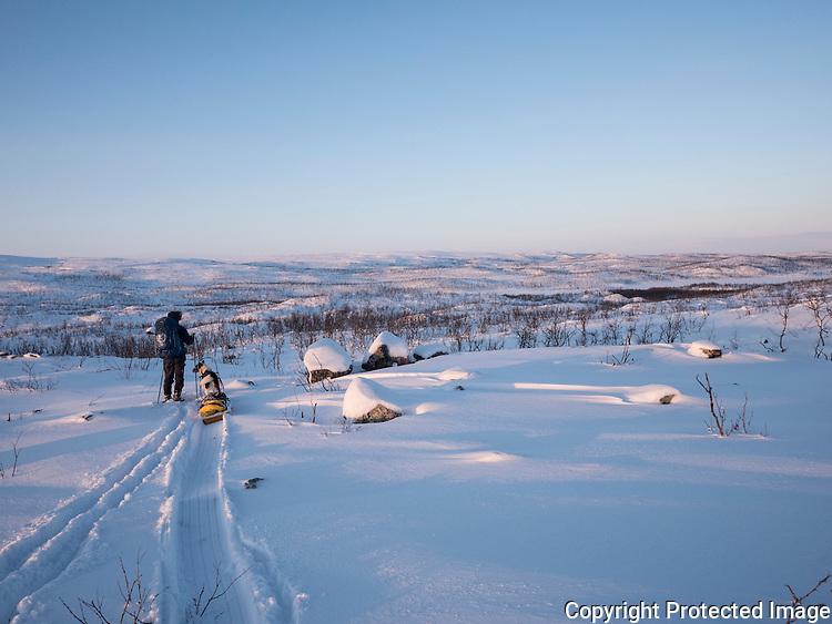 Mann med pulk, ski og grønlandshund i Gallokområdet. ---- Man with skis and greenland dog.