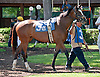 Sweet Soliloquy at Delaware Park on 6/5/13