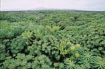 Paysage de laves colonisees par la vegetation (malpais) devant le volcan du Monte Corona. Ile de Lanzarote.