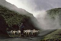 Europe/France/Aquitaine/64/Pyrénées-Atlantiques/Pays de Cize: Berger et son troupeau de brebis au col de Burdincurutcheta