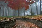 A Leaf strewn path leads into a foggy park in autumn,. Ramsey Park, Coeur d' Alene, Idaho.