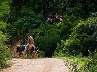 Jeceaba_MG, Brasil...Homem tocando gado na estrada de terra em Jeceaba...The man herding cattle on dirty road in Jeceaba...Foto: JOAO MARCOS ROSA / NITRO