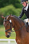 Class 6. British Dressage. Brook Farm Training Centre. Essex. 09/06/2019. ~ MANDATORY Credit Garry Bowden/Sportinpictures - NO UNAUTHORISED USE - 07837 394578