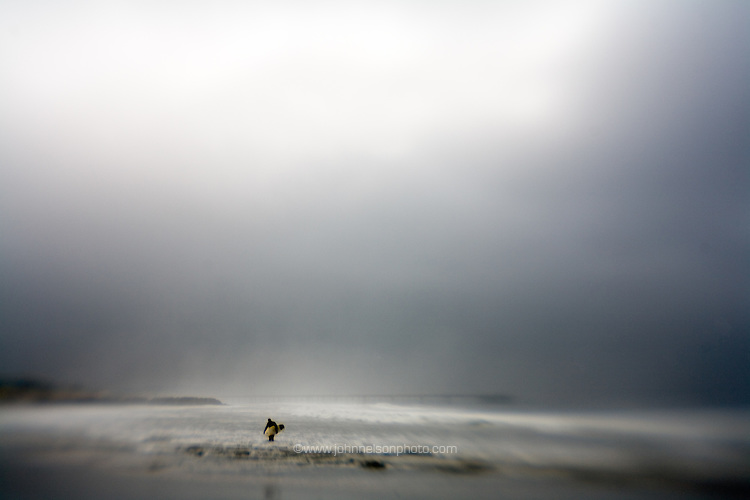 A lone surfer braves a storm in Venice Beach, ca