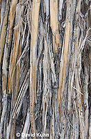1202-0867  Mojave yucca (Spanish Dagger) in Mojave Desert, Details of Bark on Trunk Base, Yucca schidigera  © David Kuhn/Dwight Kuhn Photography