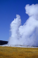 Geyser in Yellowstone national Park, Wyoming, USA