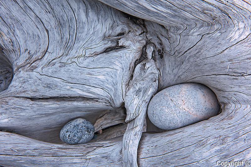 Rocks in driftwood on Pebble Beach<br />Marathon<br />Ontario<br />Canada