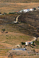 vineyards quinta vista alegre douro portugal