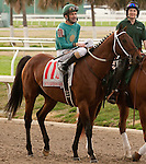 Feb 2011:  Expansion and Gerard Melancon (11) before the Fair Grounds Handicap at the Fairgrounds in New Orleans, Louisiana.
