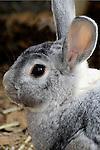Bunny Love! Bunny Photo. Marc Caryl Nature Photos.