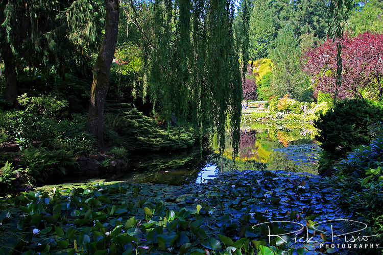 Shade and Sun at Butchart Gardens in British Columbia, Canada