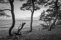 Archipelago B&W/ skärgården i svartvitt