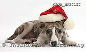 Kim, CHRISTMAS ANIMALS, photos, GBJBWP27157,#XA# stickers