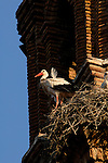 White Stork standing  on edge of church tower,Alfaro, Spain