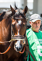 ELMONT, NY - JUNE 10: Songbird #5 is walked in the paddock before winning the Ogden Phipps Stakes on Belmont Stakes Day at Belmont Park on June 10, 2017 in Elmont, New York (Photo by Jesse Caris/Eclipse Sportswire/Getty Images)