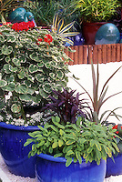 Herb sage in pretty blue ceramic pot with matching planters of annual geraniums (Pelargonium), and other plants, with blue ornament balls