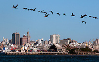 "Seagulls fly in front of the ""Isla de Ratas"" and behind is seen the skyline of Montevideo City where Italian hero, Giuseppe Garibaldi fight some navy batlles. Uruguay. Matilde Campodonico/Archivo Latino"